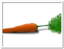 die Karotte - marchewka