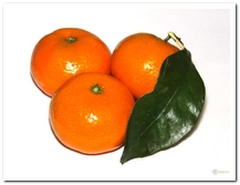 die Mandarine - mandarynka