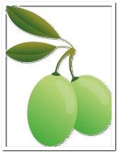 die Olive - oliwka