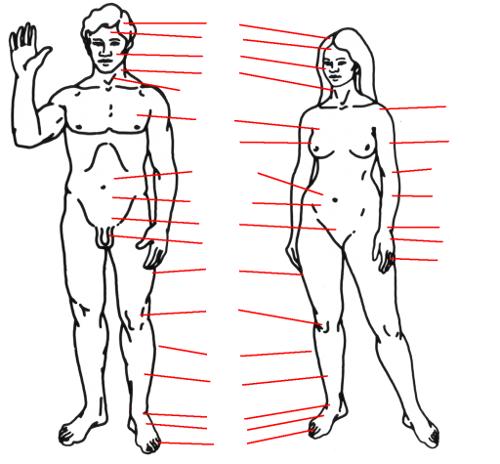 Körperteile | germaniak.eu